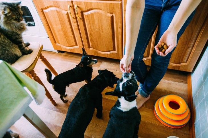 собаки дома.jpg