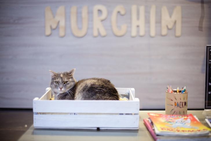 Peshkova кошка Мура