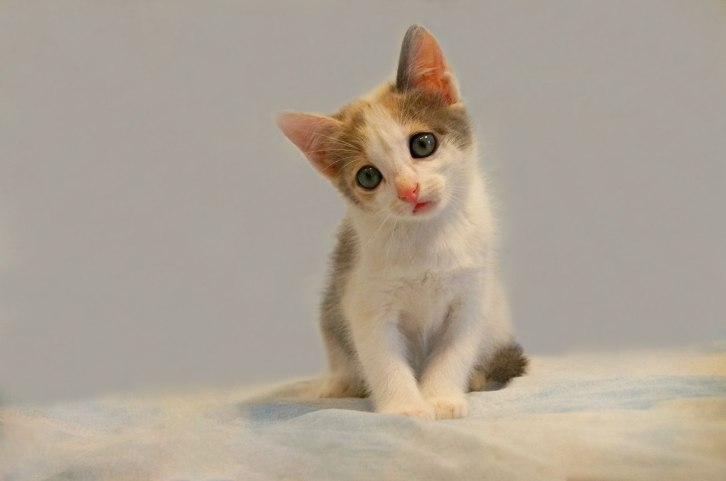 котенок амазона