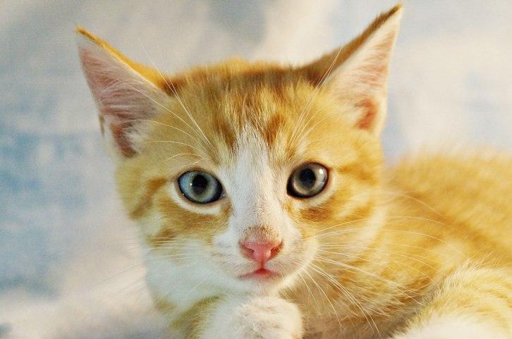 котенок ара