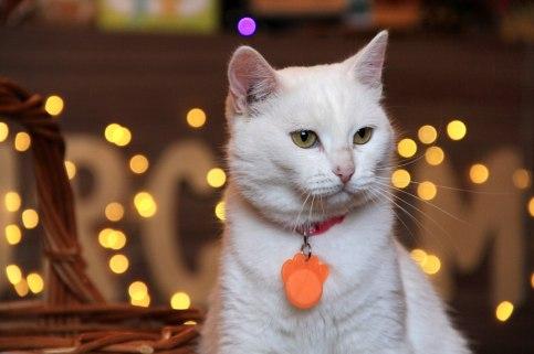 кошка леонесса