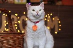 леонесса кошка