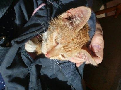 месси кошка