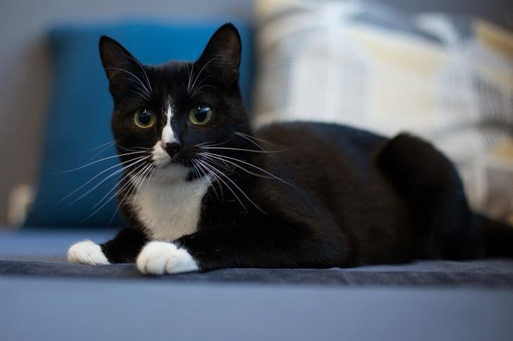 кошка Бастет