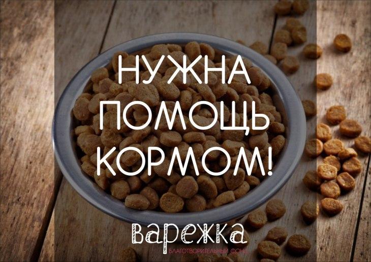 помощь кормом