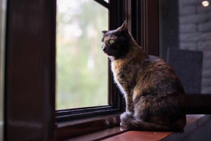 кошка Пчёла