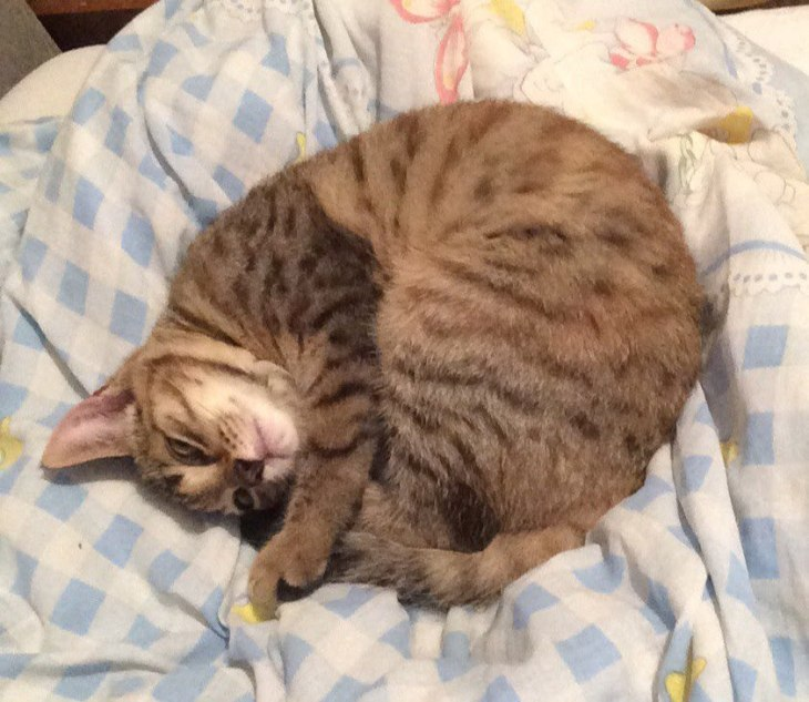 котёнок Рыся