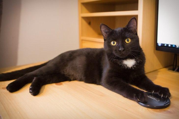 котенок Чучундра