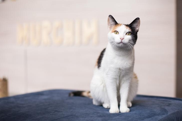 Кошка Джуна