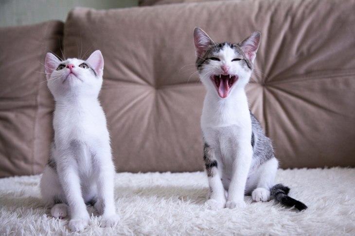 кот Чебурек