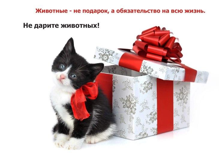 животное - не подарок