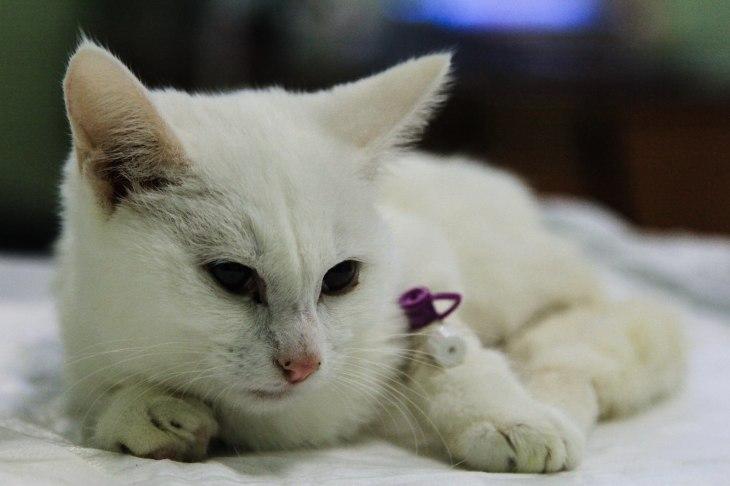 Котёнок Айсберг
