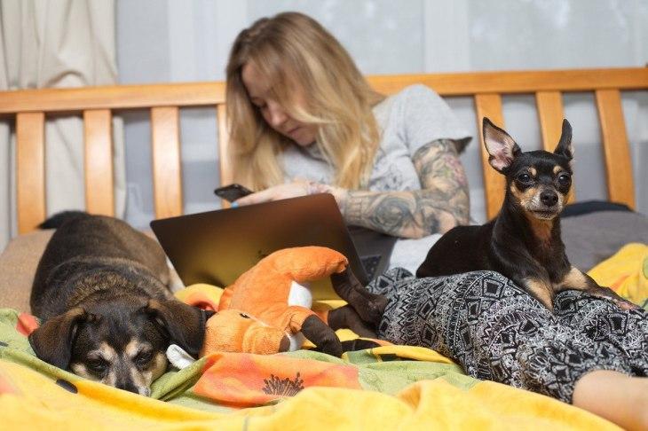 Аня и её собаки