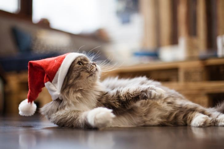 кошка Мята