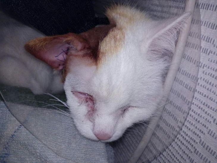 кошка Кассандра