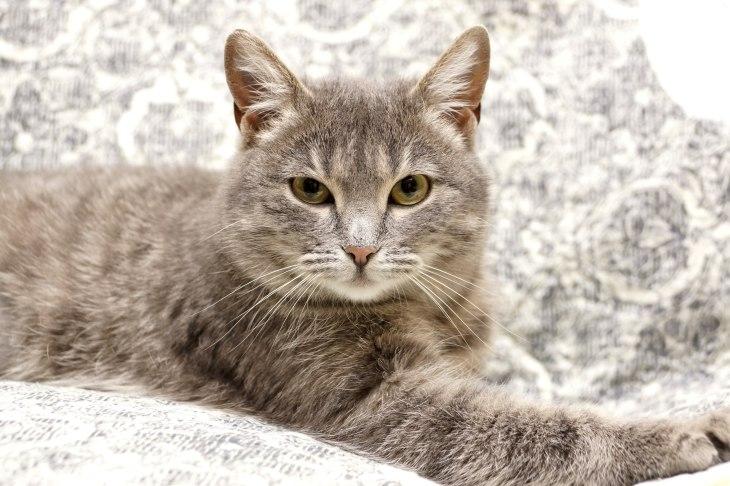 кошка Лайка