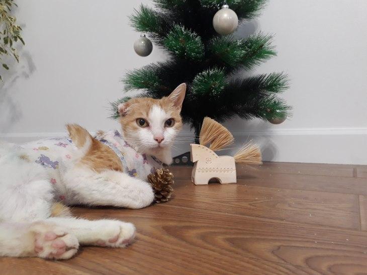 кошка Коста