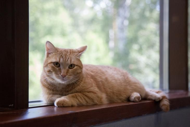 кот Кысик
