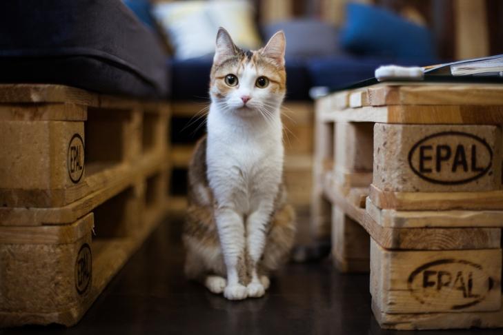 кошка Брэнди