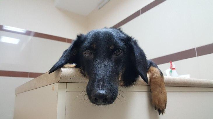 собака-инвалид Лапка