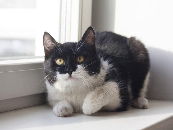 кот Пуаро