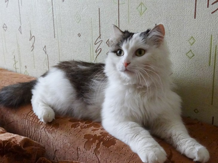 кот Пуфик