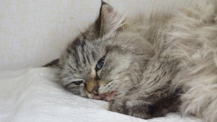кошка Эльза