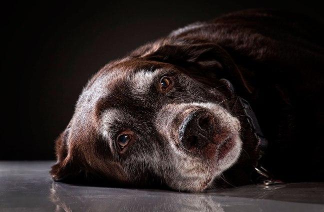 Прекрасные пожилые собаки