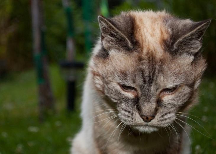 Старые кошки