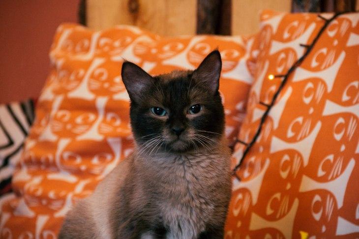 кошка Доня
