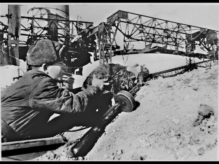 Кошки — участники Великой Отечественной Войны
