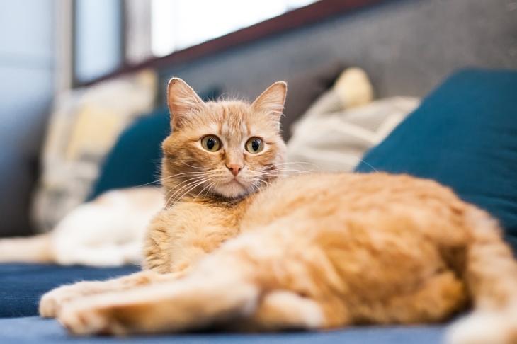кошка Изи Изи-3