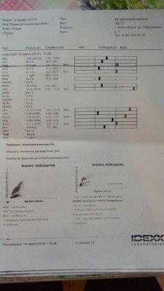 Ryzhik Sergeevich 8