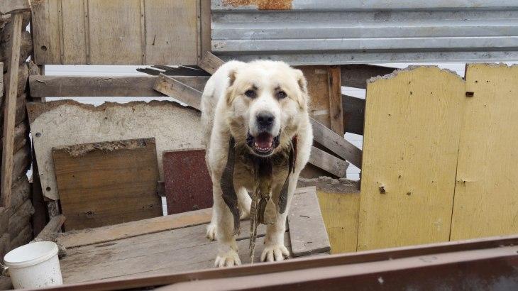 Dog Mae 2