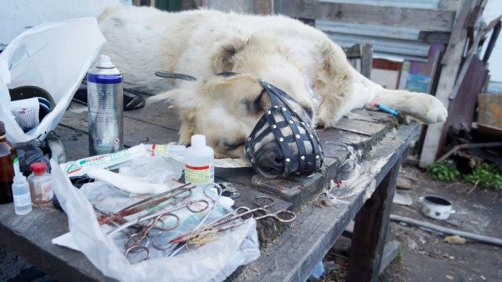 Dog Mae 8
