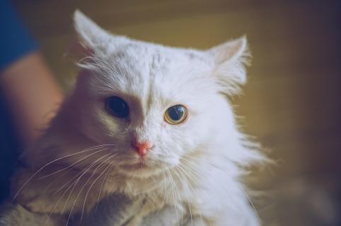 Кот Лютик