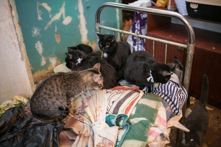 38 cats 1
