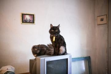 38 cats 4