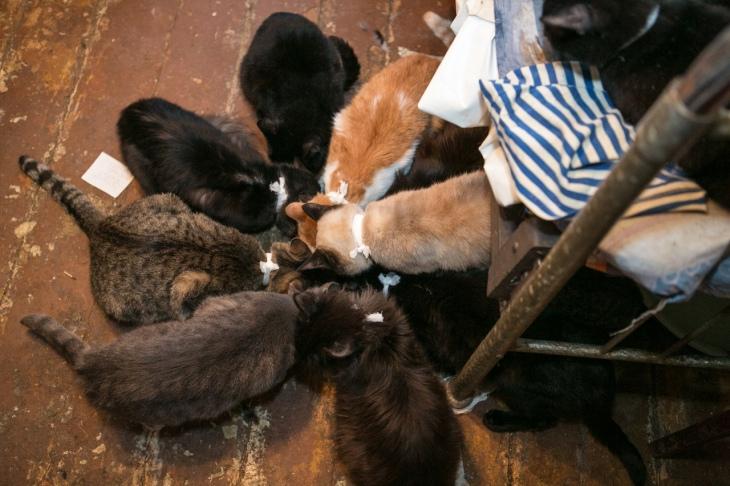 38 cats 7